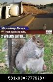 Laster umgekippt: Eichhörnchen leidet an Fressucht
