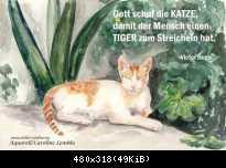 Katze-Tiger