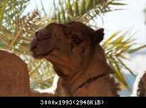 Abu Dhabi 13